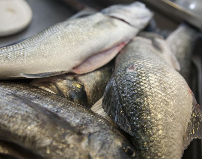 Comer en Tarifa - Pescado fresco de La Pescadería